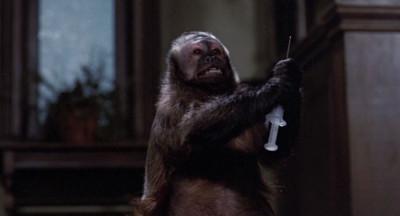 Killer monkey