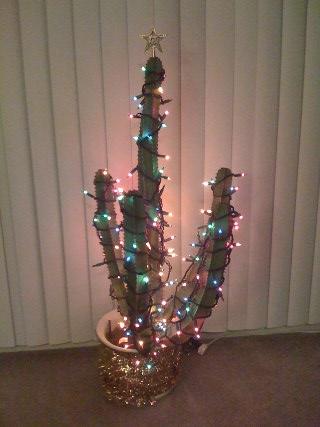 Traditional Kaedrin Christmas Cactus